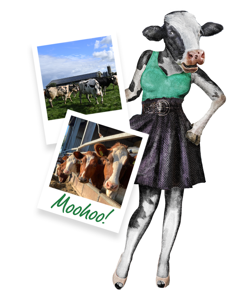 koeien de dames van akkerlust